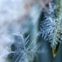 Syndrom płatka śniegu