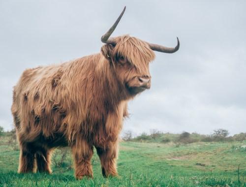 tylko krowa nie zmienia zdania
