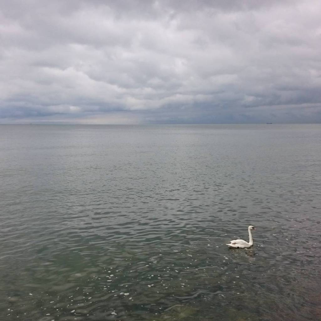 Peaceful balticsea seaside sea morze baltyk abd swan minimalizm minimalisticphotographyhellip