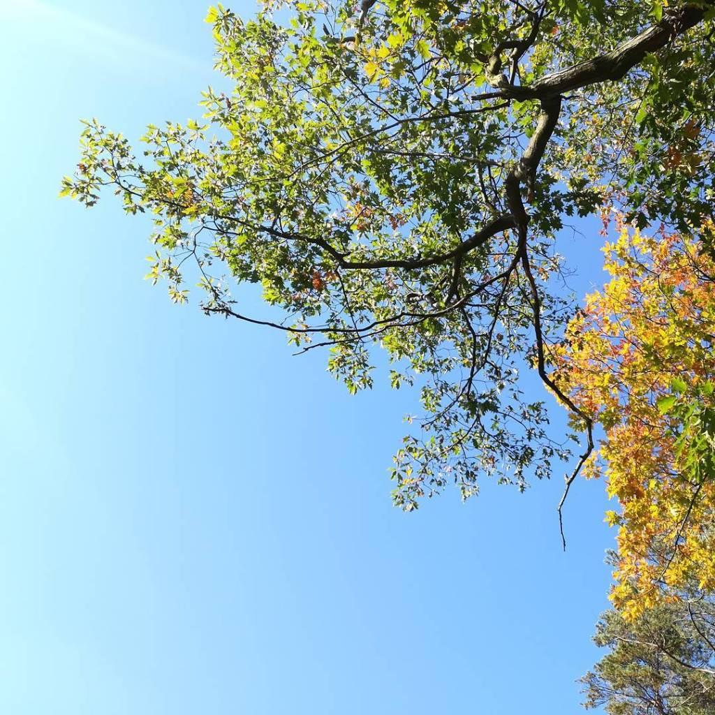 Tak jesie to ja rozumiem autumnvibe lookingup skyporn lazysunday