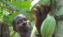 La Bad au secours de la production du cacao ivoirien #CIV