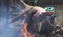 Santé / Viande de porc : le danger qui guette les consommateurs