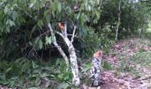 Méagui / Lotissement Cité Kouassi Lenoir : Plusieurs hectares de cacao et d'hévéa détruits #Agriculture