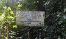 Enquête/Après l'infiltration et l'occupation de la forêt classée du Goin-Débé : La forêt classée du Cavally dans l'œil du cyclone #Environnement