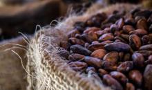 Filière cacao : Le gouvernement ivoirien lance un audit