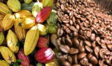 [Côte d'Ivoire Conseil café-cacao] Le gouvernement ivoirien prend d'importantes mesures