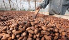 [Cacao] La Côte d'Ivoire et le Ghana de retour sur le marché mondial