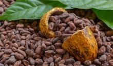[Côte d'Ivoire/Filière Cacao] Le Groupement des Négociants Ivoiriens (GNI) très inquiet du monopole des multinationales
