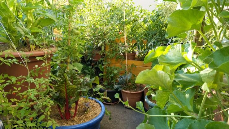 permaculture-urbaine-balcon-terrasse-hors-sol-potager-minimaliste