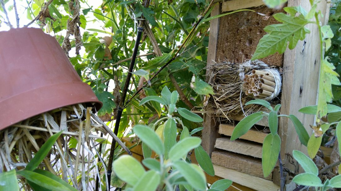 chambres-hotel-insectes-potager-terrasse-balcon