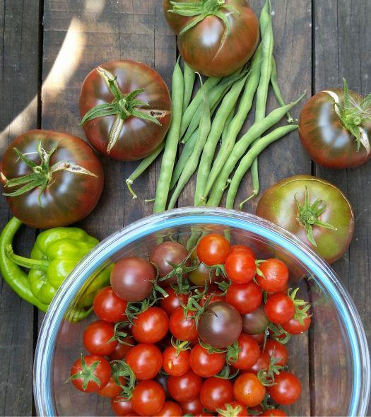 recolte-potager-bio-permaculture urbaine