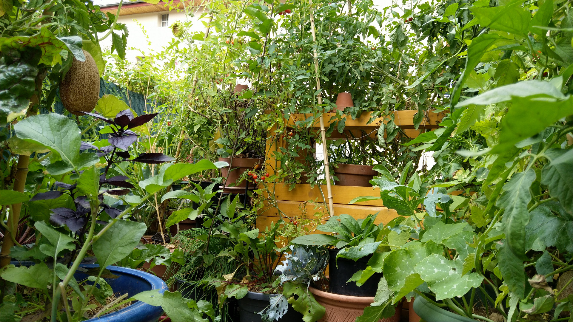 terrasse-balcon-potager-bio-vivant