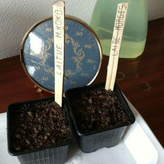 etiquetage-semis-plantation-potager-bio