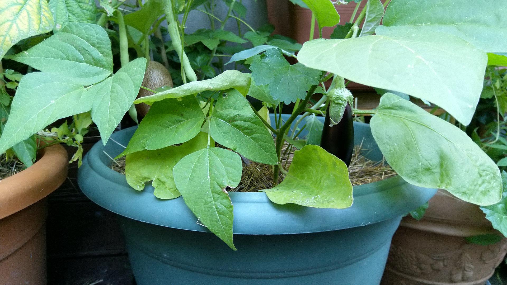 plante-verte-pot-fleurs-vivante-
