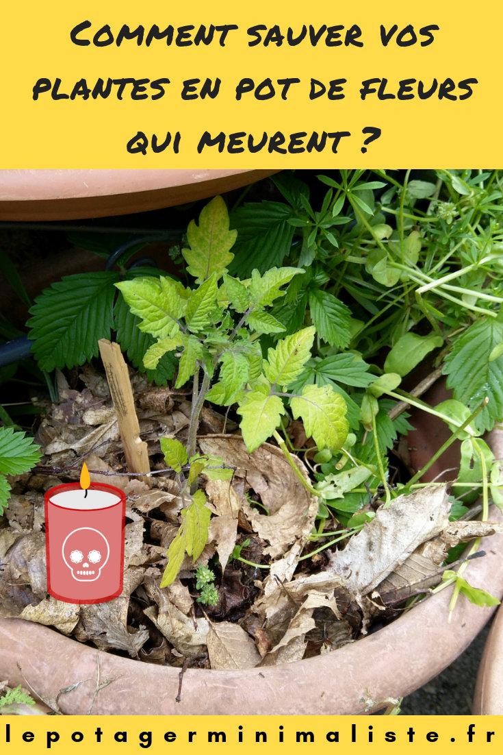 Epingle pinterest, comment sauver une plante en pot de fleurs qui meurt ?