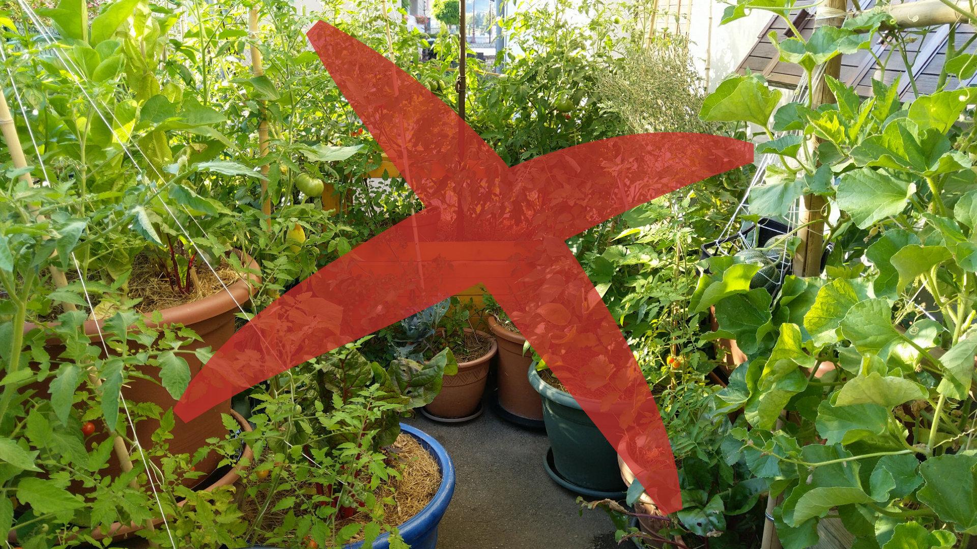 fausses-raisons-potager-balcon-permaculture