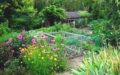 Le design du potager en permaculture
