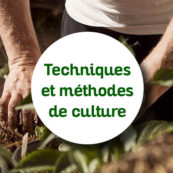 techniques de culture