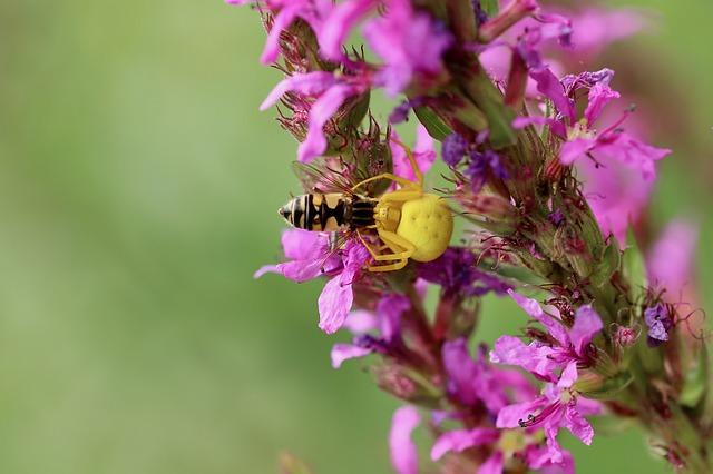 Préparez l'hiver pour la biodiversité [Article abonnés]