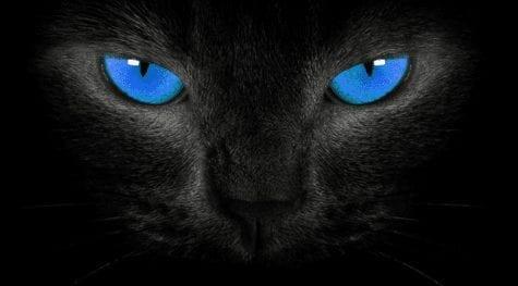 urge-kill-cat2