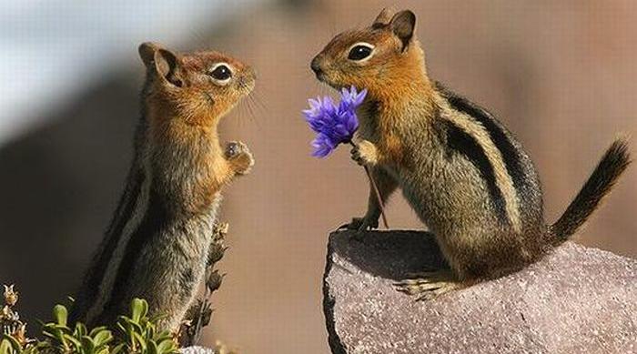 ecureuil-amour