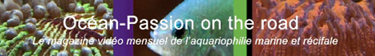 OCEAN PASSION ON THE ROAD 43