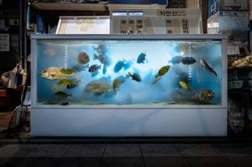 fishtanks-1-900x600