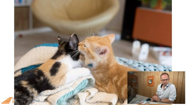 scherpe-foto's-kittens