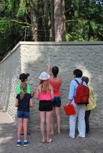 Wie hoch ist die Mauer?