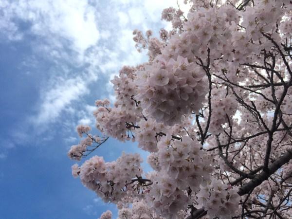 Photo Apr 04, 12 33 33 PM