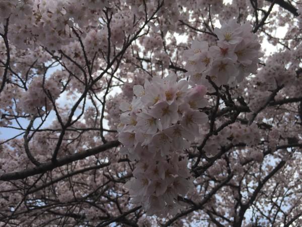 Photo Apr 04, 12 33 41 PM