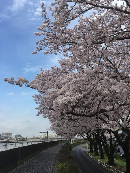 Photo Apr 04, 12 34 25 PM