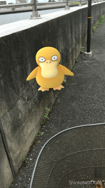 A Psyduck on my route.