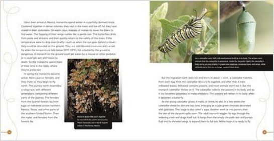 spread from The Monarchs Are Missing, which features the work of Dr. Lincoln Brower