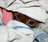 Jan 30, 2005: Brrr!  Nose cold!