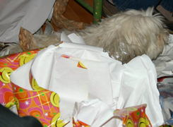 Gribouille sleeping amidst the wrapping paper.