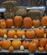 Pretty pumpkins of all sizes!