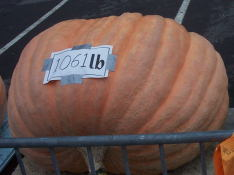 I wonder how many pumkin pies this could make.