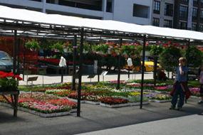 Flowers on sale in the Market on York Street.