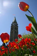 The Peace Tower and tulips!