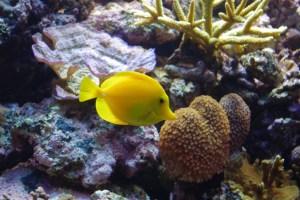 bel aquarium recifal 7336