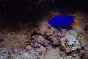 bel aquarium recifal 7346