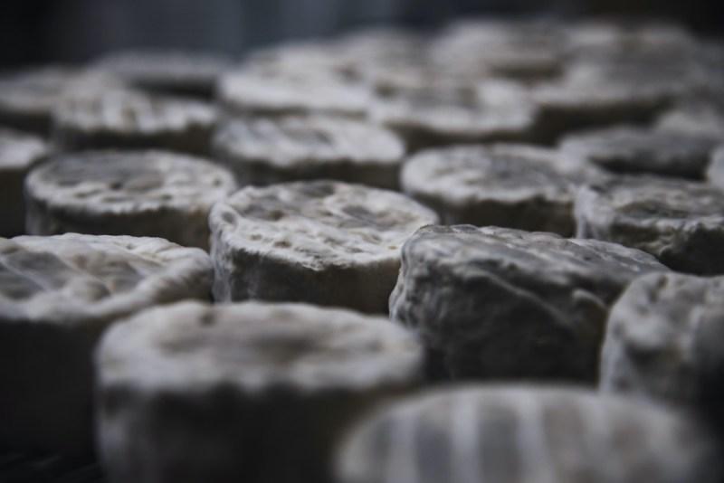 Bretonne Pie Noir - Ferme des 7 Chemins - Cédric Briand - Photo Paul Stefanaggi