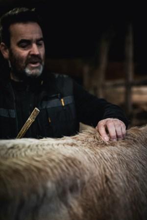 Laurent Chalet - Vache Nantaise - Photo Paul Stefanaggi
