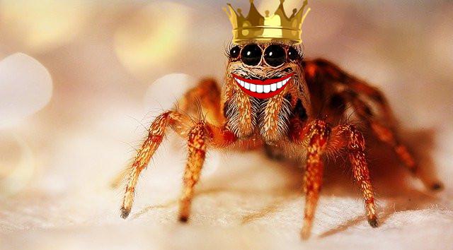 Qui a peur du dentiste? le roi des araignées et le dentiste