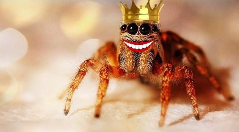 Qui a peur du dentiste- le roi des araignées