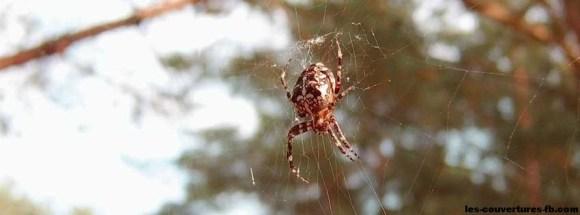 Araignée suspendue à sa toile - Photo de couverture Facebook