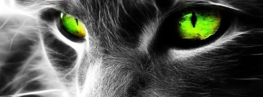 chat noir photo de couverture journal facebook