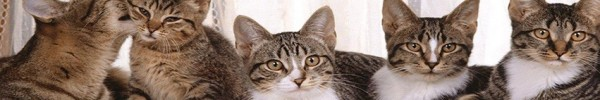 chats-en-bande-photo-de-couverture-facebook