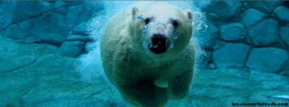 ours polaire sous l'eau-Photo de couverture journal Facebook